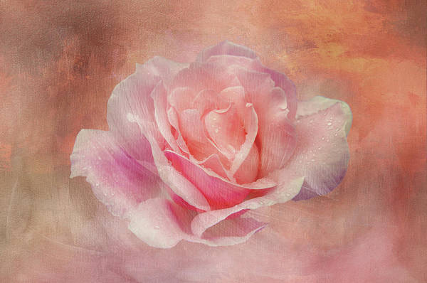 Wall Art - Digital Art - Velvet Pink Rose by Terry Davis
