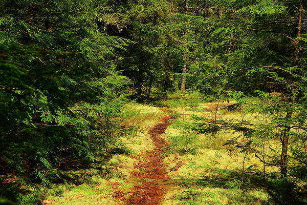 Photograph - Velvet Rocks On The Nh Appalachian Trail by Raymond Salani III