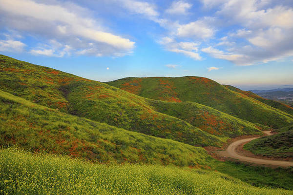 Wall Art - Photograph - Verdant Hills by Bridget Calip