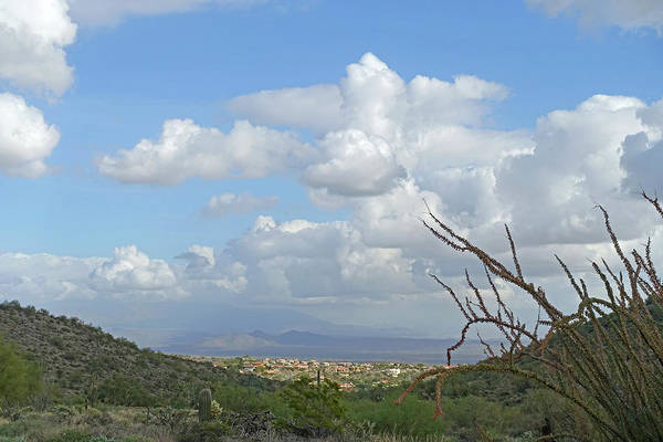 Photograph - Verdant Valley 3 by Lynda Lehmann