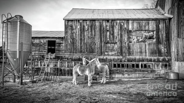 Wall Art - Photograph - Vermont Barn And Horses Sugarbush Farm by Edward Fielding
