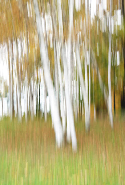 Photograph - Vermont Fall Birches by Gordon Ripley