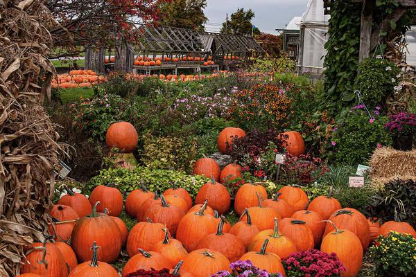 Photograph - Vermont Farm Stand Pumpkins by Jeff Folger
