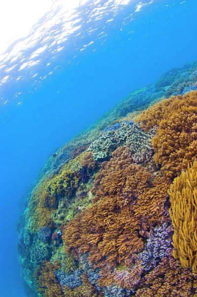 Underwater Scene Photograph - Very Beautiful Soft Corals by Shin Okamoto