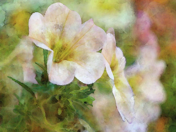 Photograph - Very Light 6565 Idp_2 by Steven Ward