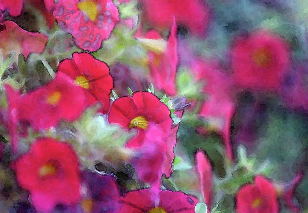 Photograph - Very Red 6556 Idp_2 by Steven Ward