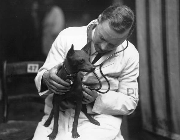 White Dog Photograph - Vet Check by Topical Press Agency