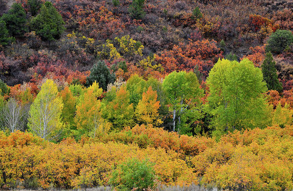 Photograph - Vibrant Fall Colors Along County Road 5 by Ray Mathis