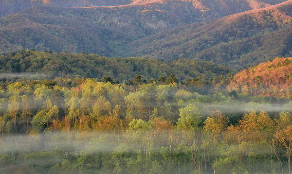 Photograph - Vibrant Morning In Cades Cove by Dan Sproul