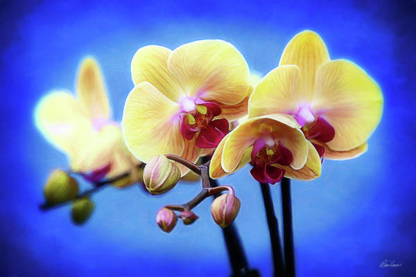 Photograph - Vibrant Orchids by Diana Haronis
