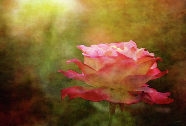Photograph - Vibrant Rose 5602 Idp_2 by Steven Ward