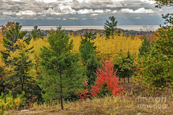 Photograph - Vibrant Shades Of Red, Green, And Yellow Leaves by Sue Smith