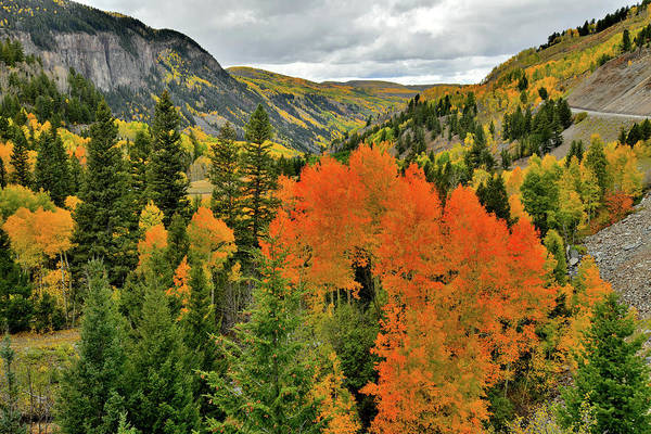 Photograph - Vibrantly Colored Aspens Along Highway 145 by Ray Mathis