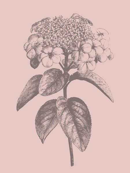 Bouquet Mixed Media - Viburnum Blush Pink Flower by Naxart Studio