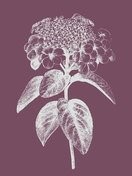 Bouquet Mixed Media - Viburnum Blush Purple Flower by Naxart Studio