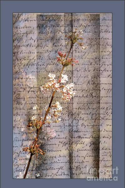 Digital Art - Viburnum Flowers 2 by Liz Alderdice