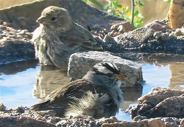 Photograph - Videoed Birds Bathing by Judy Kennedy