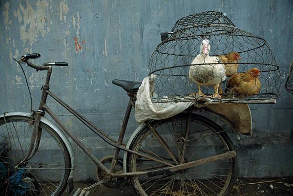 Birdcage Photograph - Vietnam, Hanoi, Fowl Market Near Long by Macduff Everton