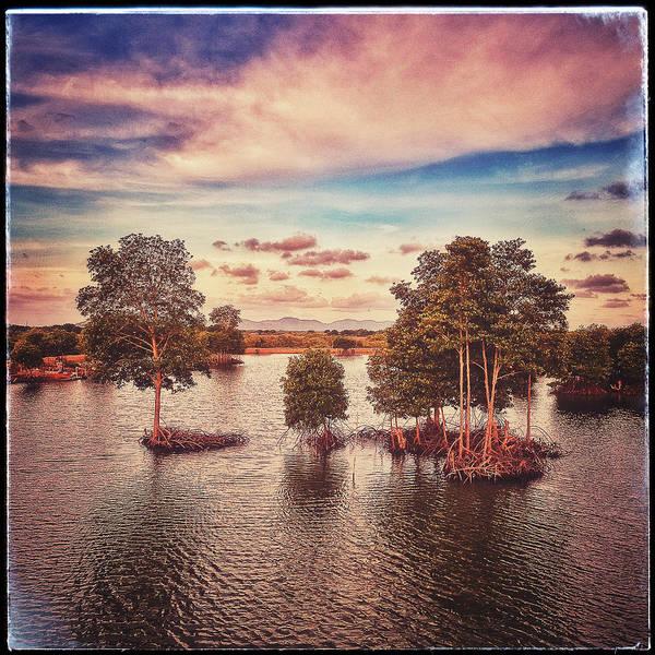 Vung Tau Photograph - Vietnam Mangrove  by Britt Traynham