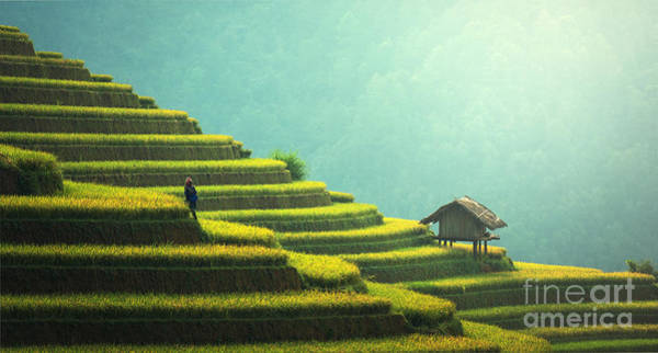 Myanmar Wall Art - Photograph - Vietnam Rice Fields On Terraced Of Mu by Sasintipchai
