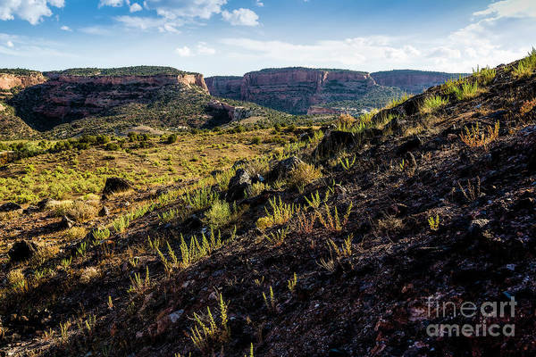 Photograph - View From Dinosaur Hill by Jon Burch Photography