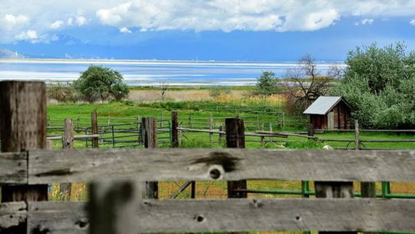 Photograph - View From The Corral by Jerry Sodorff