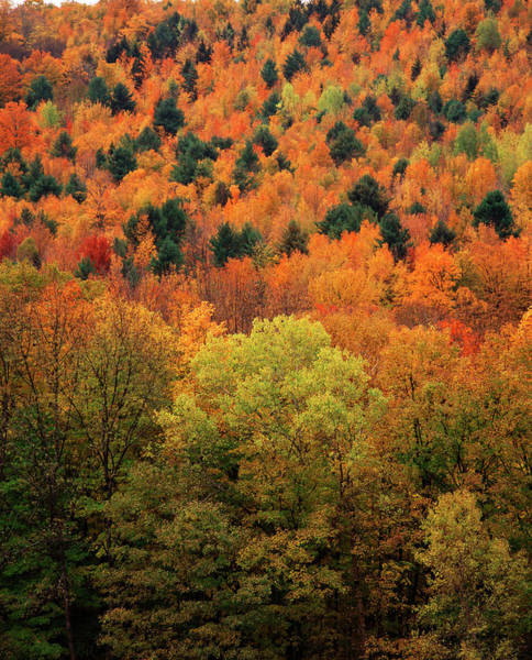 Vermont Photograph - View Of Autumn Forest, Vermont, Usa by Danita Delimont