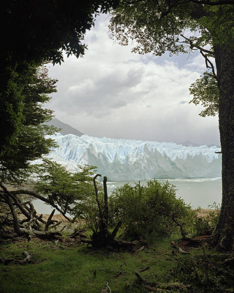 Scale Photograph - View Of Iceberg Through Trees by Michael Blann