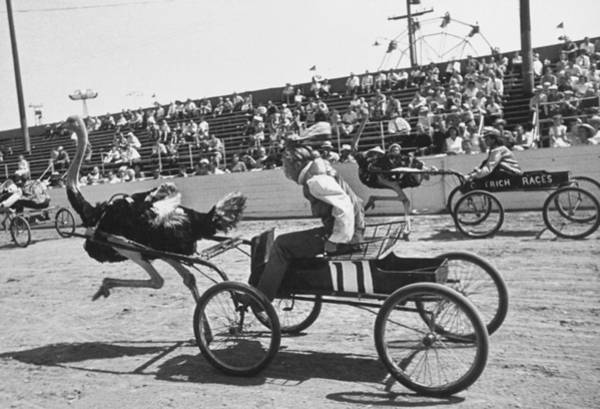 Photograph - View Of Racers During The Ostrich Racing by Loomis Dean