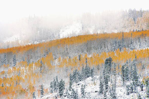 Uinta Photograph - View Over Aspen Forests In Autumn, With by Mint Images