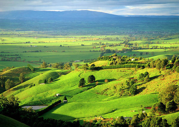 Grazing Photograph - View Over The Latrobe Valley To The Baw by Australian Scenics