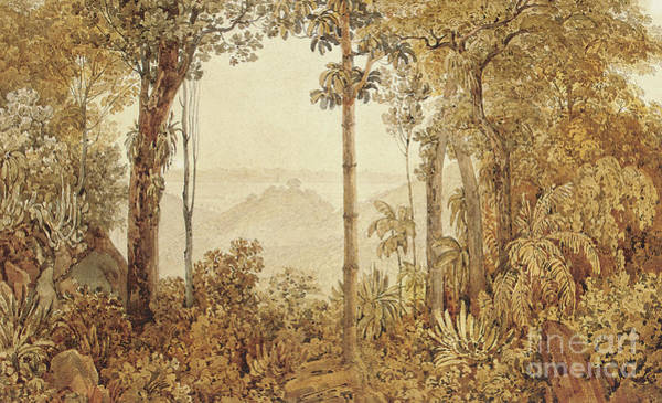 Wall Art - Painting - View Overlooking Rio De Janeiro From The Tijuca Forest  by Thomas Ender