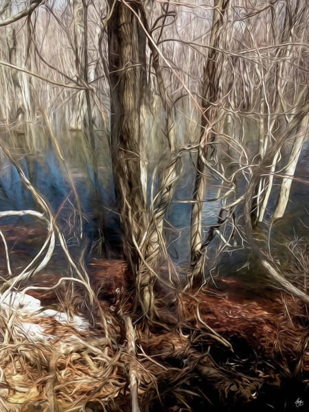 Photograph - Vines In A Floodplain Forest by Wayne King