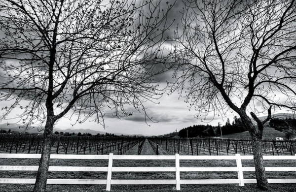 Fence Photograph - Vines With Fence by Mathew Spolin