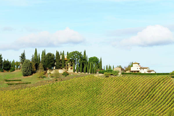 Environmental Issues Photograph - Vineyard And Farmhouse by Lisa-blue