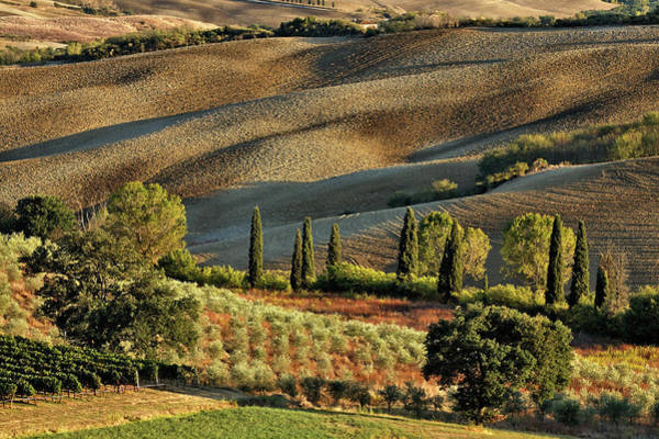 Wall Art - Photograph - Vineyard And Olive Groves Among by Adam Jones