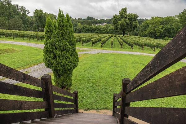 Photograph - Vineyard Greens by Kristopher Schoenleber