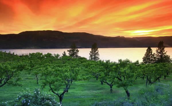 Okanagan Photograph - Vineyard by Imaginegolf