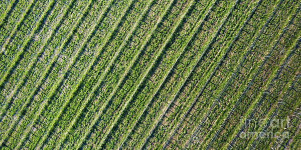 Wall Art - Photograph - Vineyard In Spring Aerial by Twenty Two North Photography