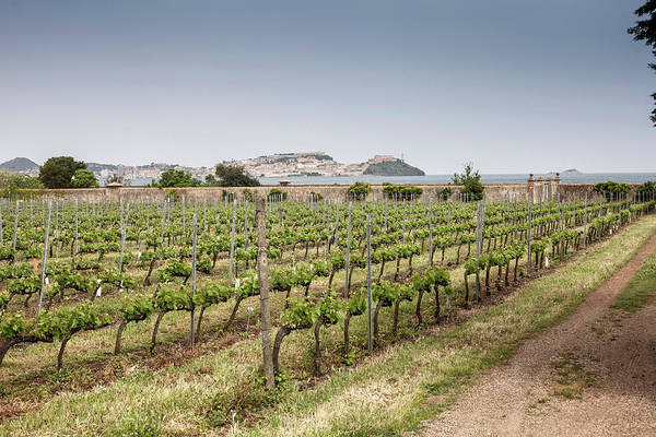 Elba Photograph - Vineyard Near Marciana, Elba Island by Walter Zerla