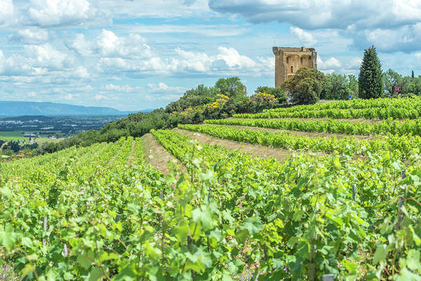 Wall Art - Photograph - Vineyard, Rhone Valley, Ruins by Jim Engelbrecht