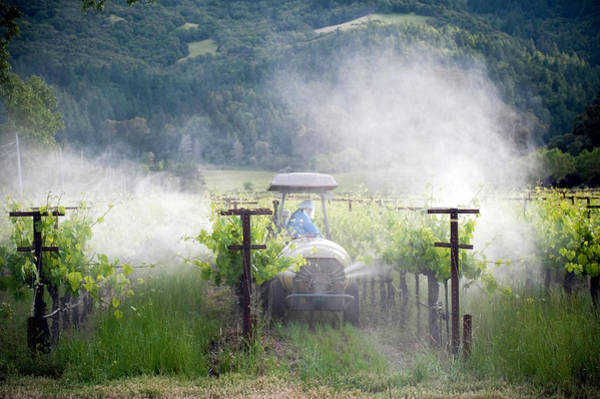 Sulphur Photograph - Vineyard Spraying by Philary