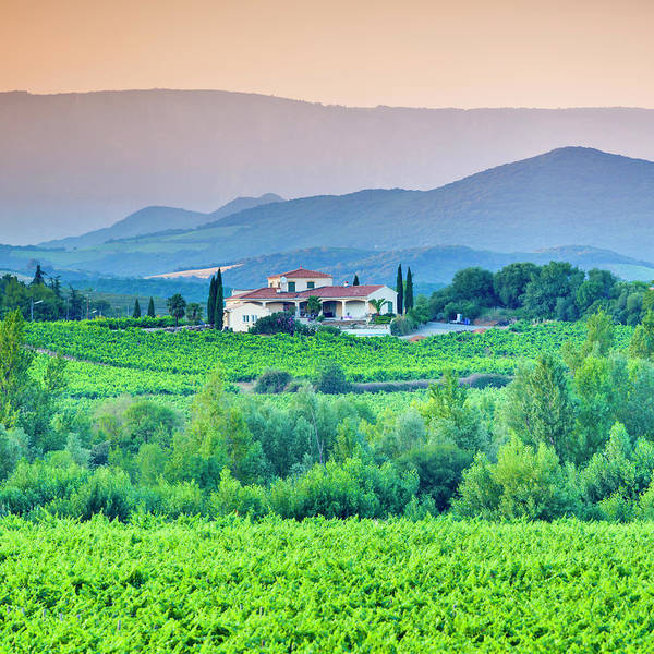 Villa Photograph - Vineyard, Villa And Rolling Hills In by Espiegle