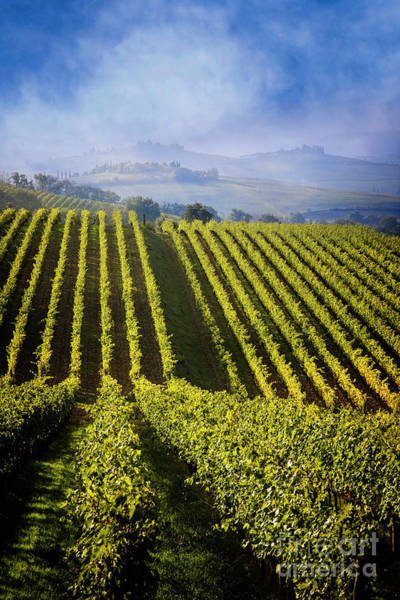 Photograph - Vineyards Of Chianti by Scott Kemper