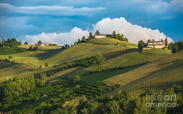 Vines Wall Art - Photograph - Vineyards Of Langhe, Piedmont, Unesco by Javarman