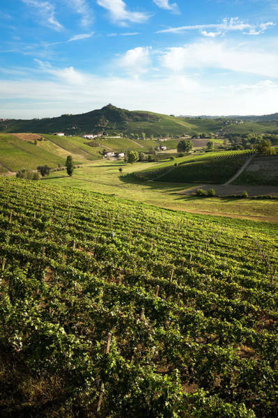 Cultivate Photograph - Vineyards by Scacciamosche