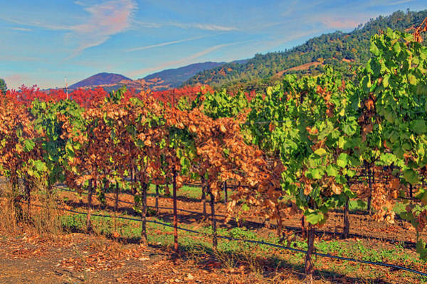 Camera Raw Photograph - Vineyards Sonoma County by Brenton Cooper
