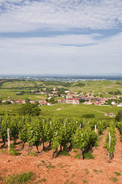 Winemaking Photograph - Vineyards Surrounding The Village Of by Julian Elliott Photography