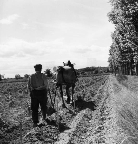 Plow Horses Photograph - Viniculture by Three Lions