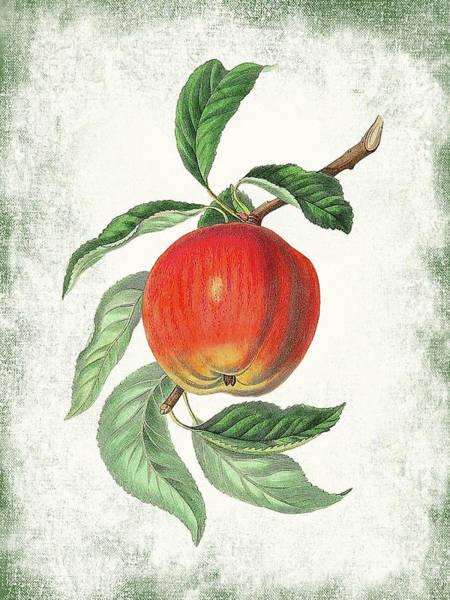 Wall Art - Digital Art - Vintage Apple Botanical by Flo Karp